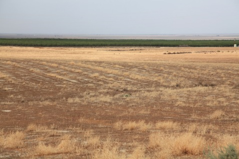 Drought in the San Jaoquin Valley