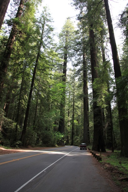 My truck parked along the Avenue of the Giants