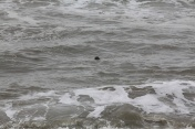 Sea Lion checking me out