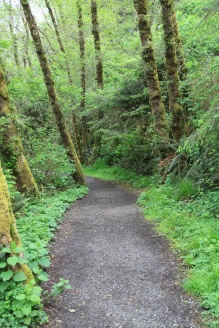 The path leading to Fern Canyon