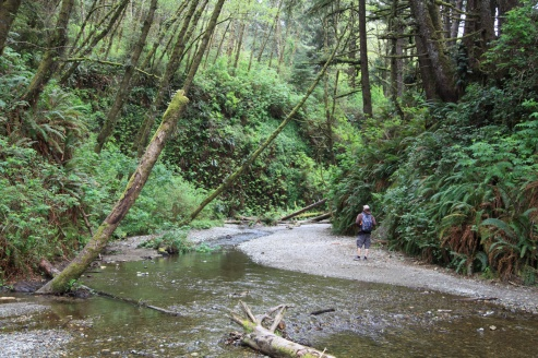 The entrance to Fern Canyon