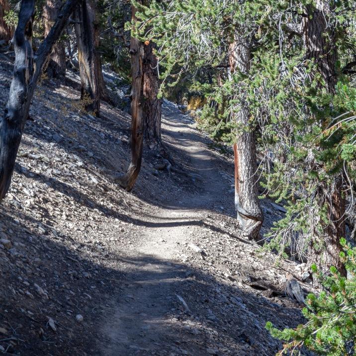Methuselah Trail