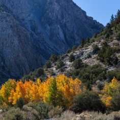 Autumn near Grant Lake
