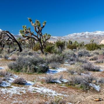 Joshua Trees & San Bernardino Mountains