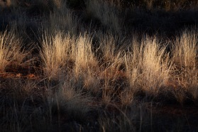 Morning Sun on Grass